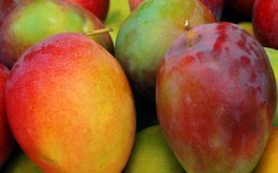 Las propiedades del mango